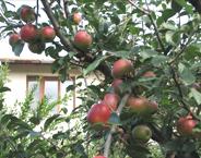 Fruit Nursery SP