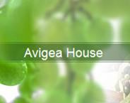Avigea House