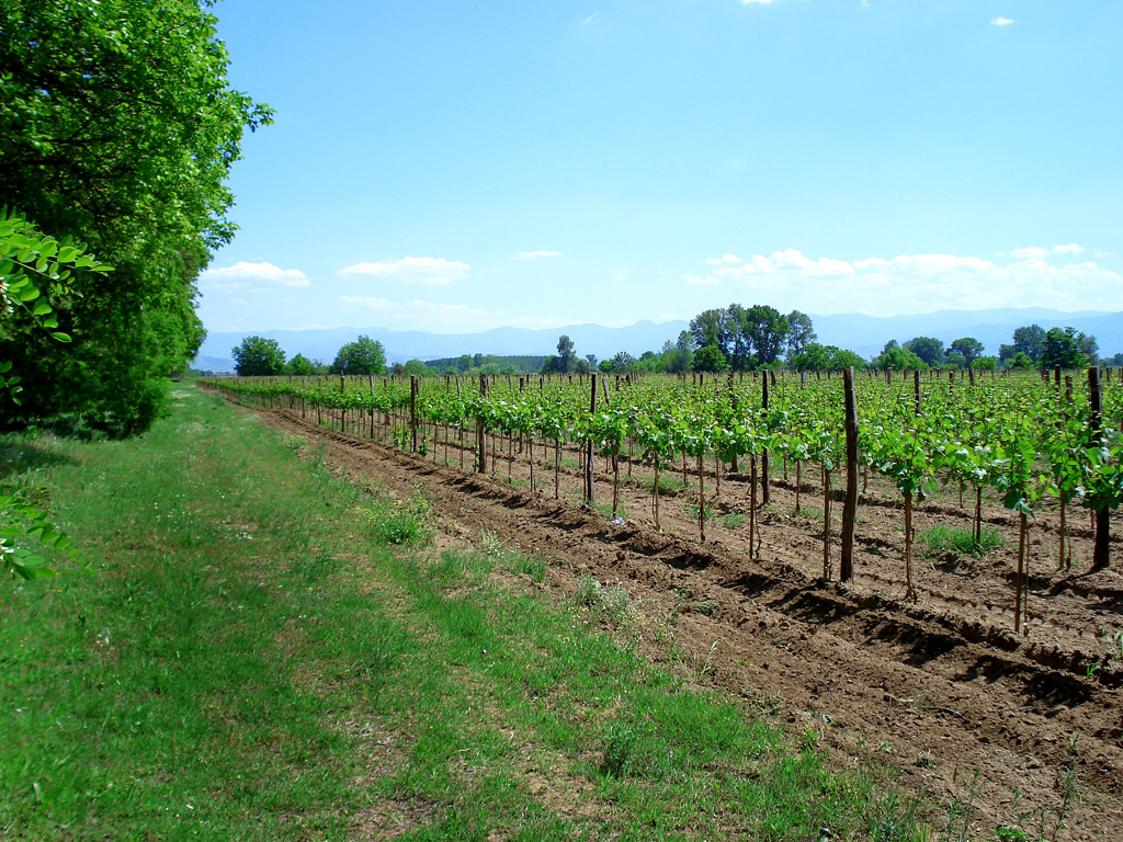 Outsourcing wine production to bulgaria essay