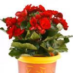 Bulgaria Flower Delivery  - Invest Bulgaria.com