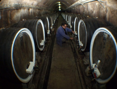 BULGARIAN LOCAL WINE SALES UP 40% H1 2011 Y/Y